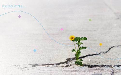 A flor que rompe o asfalto: desafios e oportunidades do ensino remoto